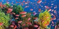 Barrier reef widget